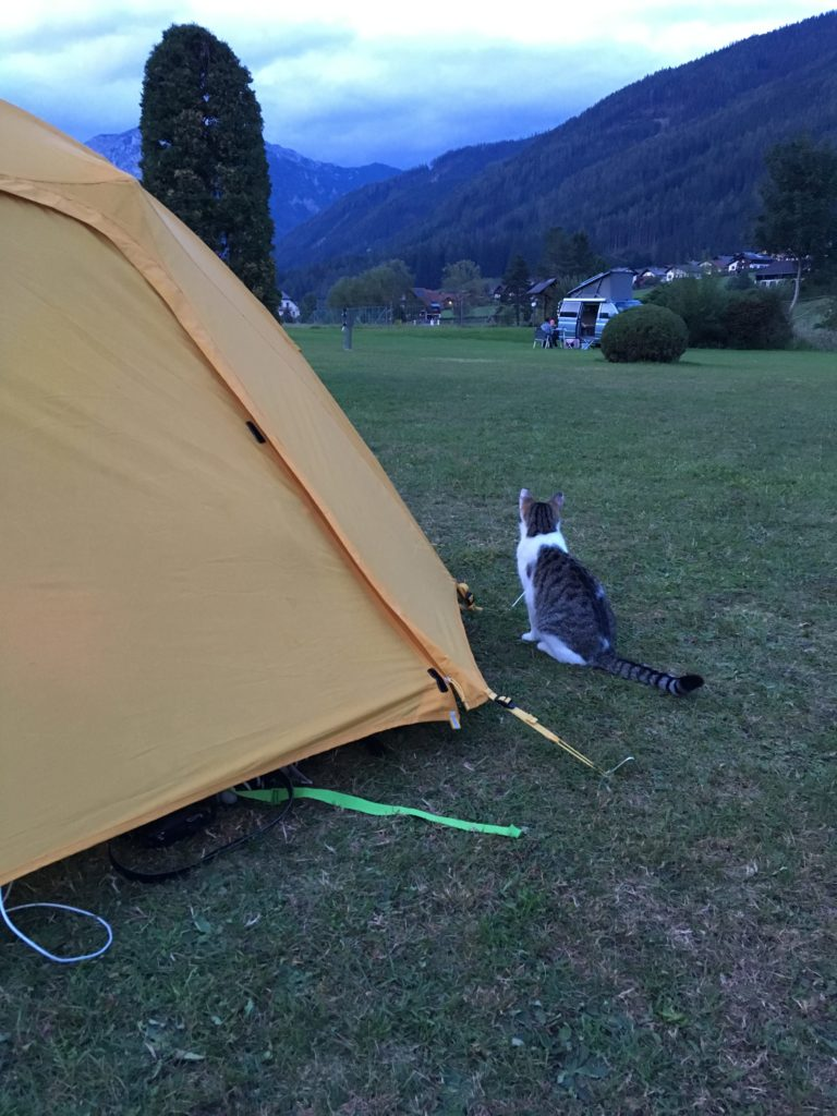 Campsite kitty guarding our tent