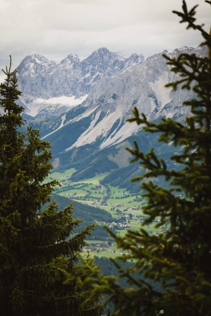 Dachstein framed by pine trees