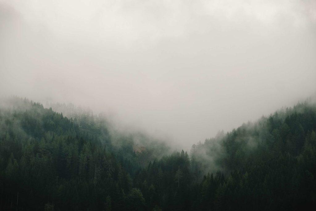 A moody, foggy forest behind Pichl-Großdorf