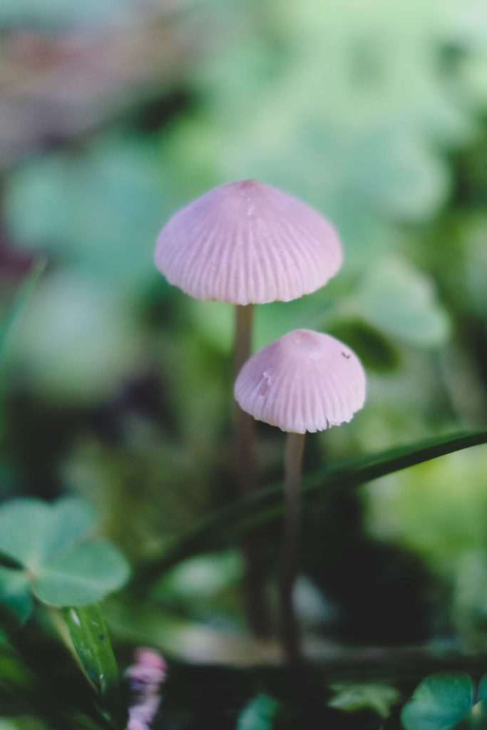Tiny thin mushrooms in the forests surrounding Krimml