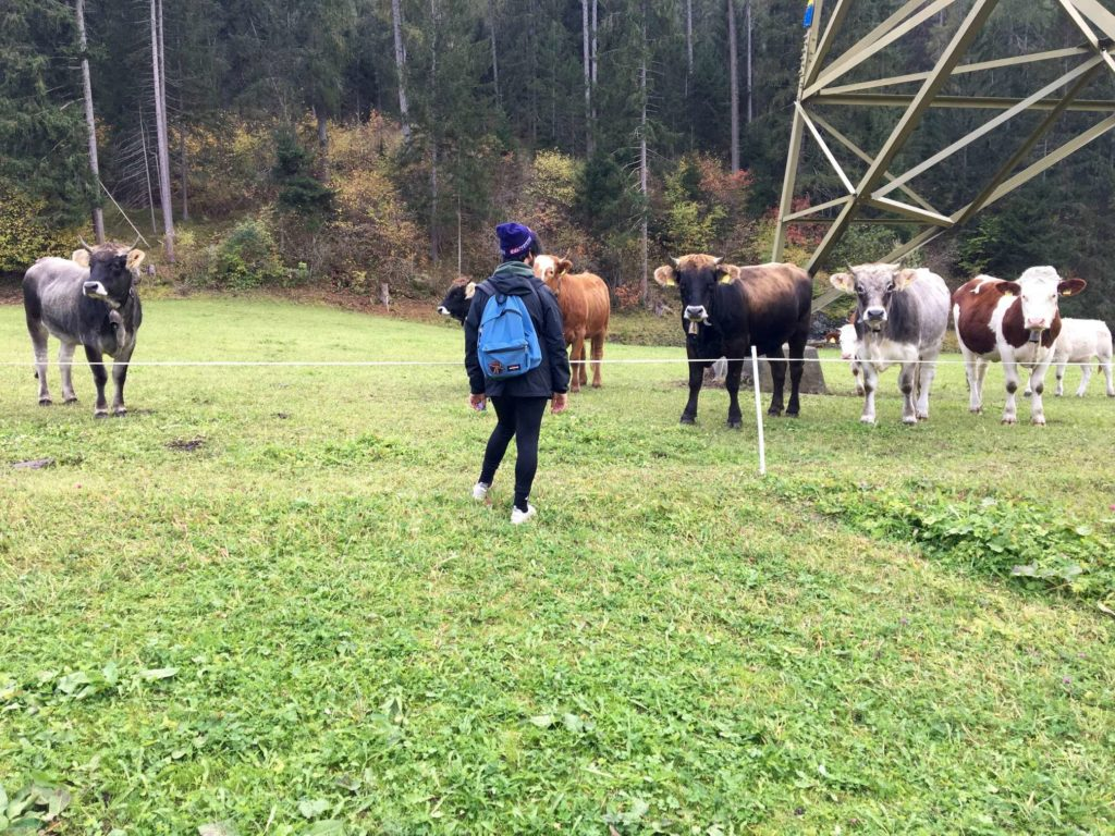 Aydin looking at some cows in a field