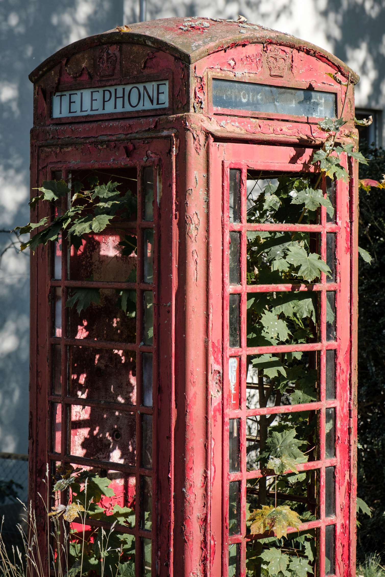 A decrepit old red British telephone box overgrown with plants