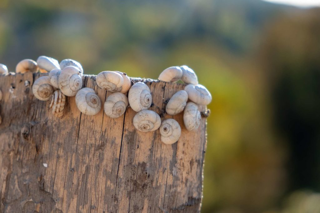 Lots of snails on the top of a wooden post