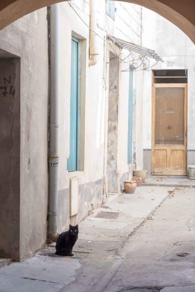 Black cat in Arles archway