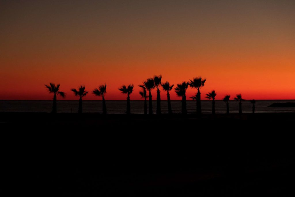 Palm trees in the twilight