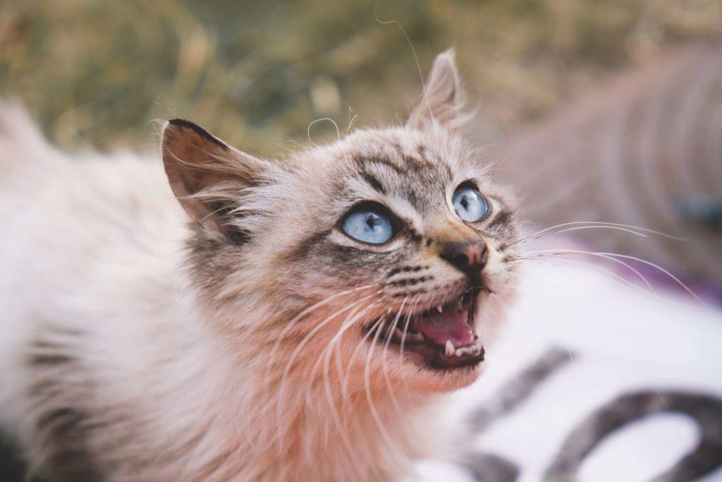 Espot petrol station kitty closeup meowing