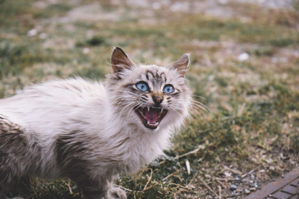 Espot petrol station kitty meowing