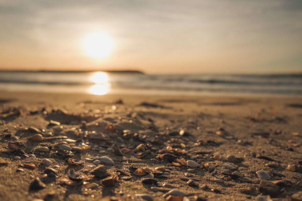 Shells on the Camargue beach during sunrise