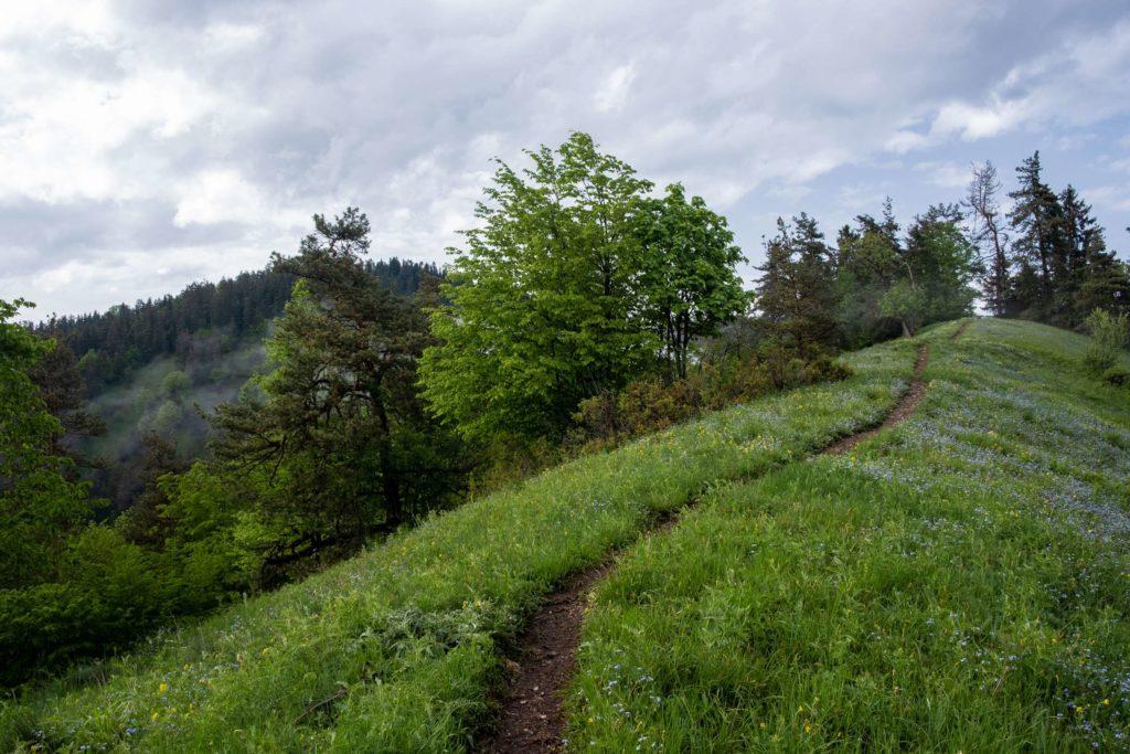 Footprint trail, Borjomi National Park, Samtskhe-Javakheti