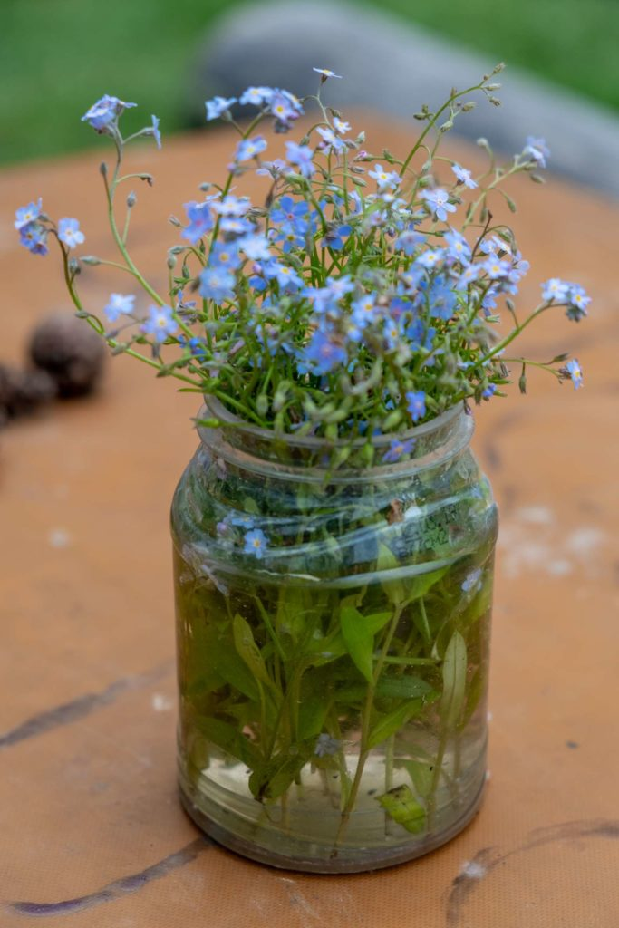 A jar with blue wildflowers someone put on the table at the picnic area in Borjomi National Park