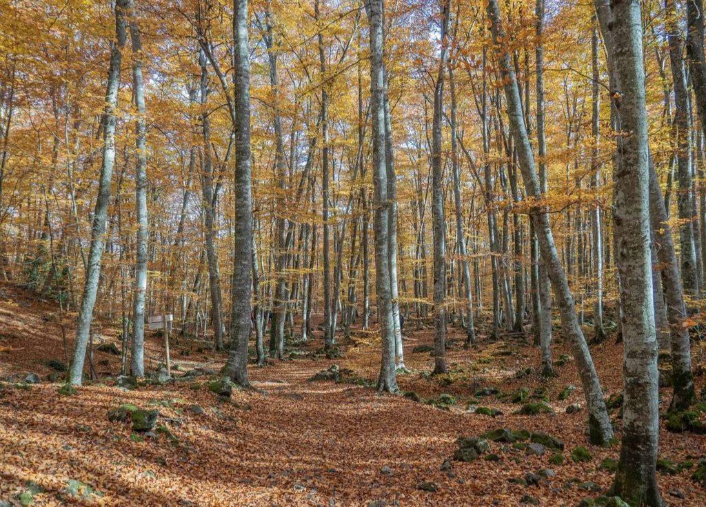 la Fageda d'en Jordà, famous forest in Catalonia