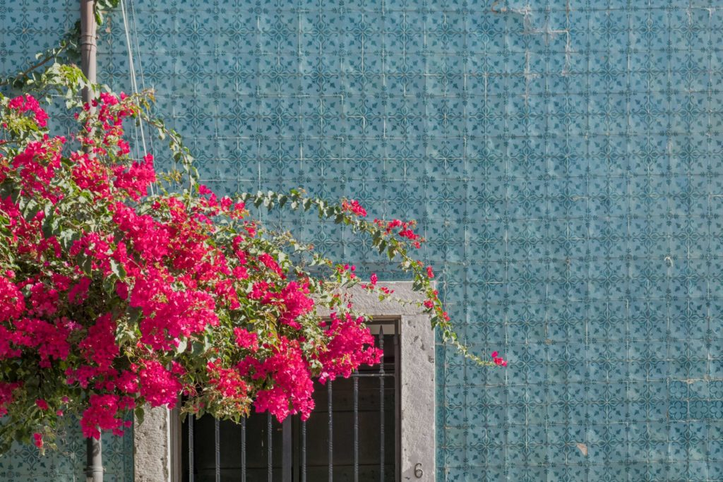 Blue tiles and pink flowers above a door in Lisbon