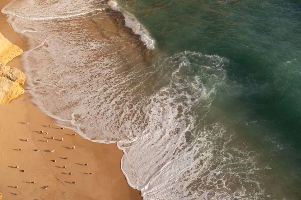 Seagulls on beach at Praia da Corredoura